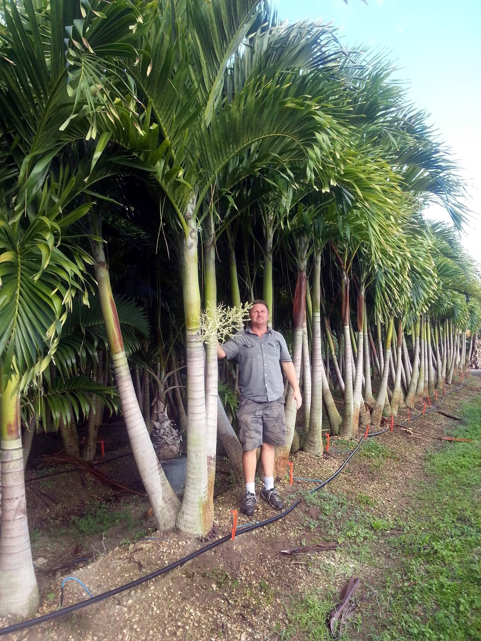 Atlanta Georgia Palm Tree Wholesale Dealer